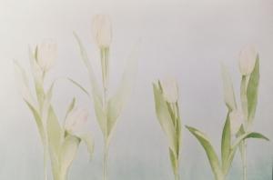 roze-tulpen
