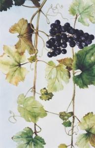 wijnranken_0