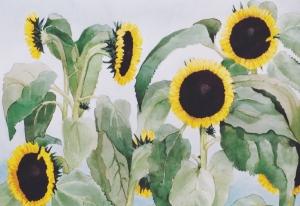 zonnebloemen-18