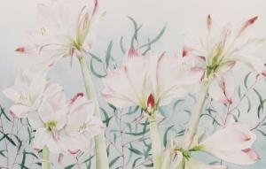 amarylles-roze-16
