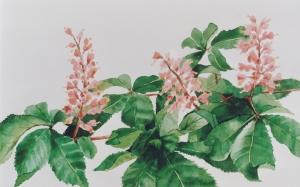 kastanjebloesem-roze13