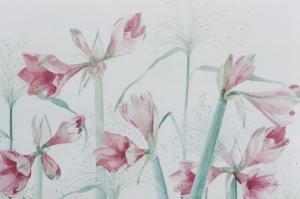roze-amarylles-14