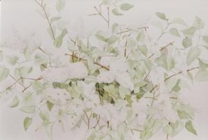 witte-seringen-15