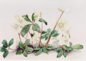 bloemen-7